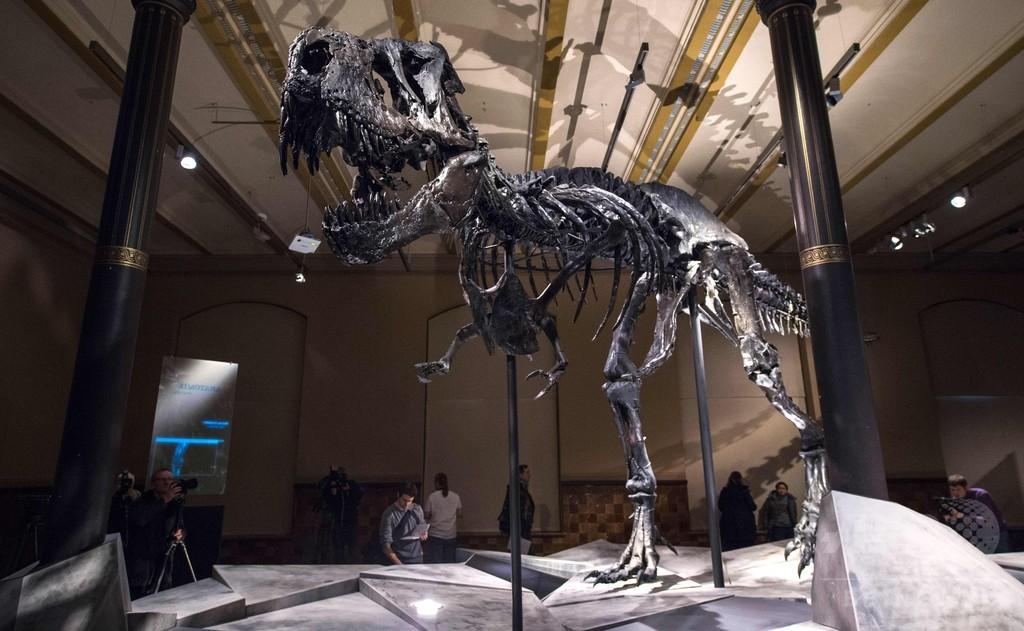 恐竜、小惑星衝突の数千万年前から生存の危機 研究