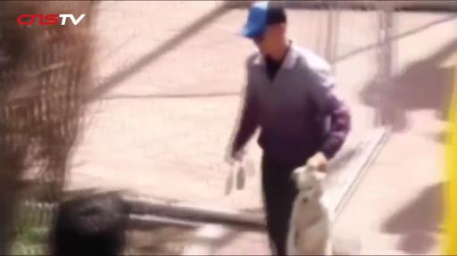 動画:体育祭の競走に犬が乱入、でもナンバー1にはなれなかったワン