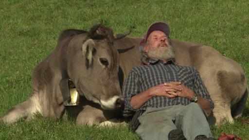 動画:牛の角切りはダメ? スイスで国民投票、注目の結果は…