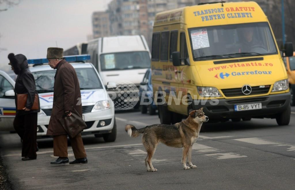 野良犬は1棟に1匹、区役所が規則 ルーマニア首都
