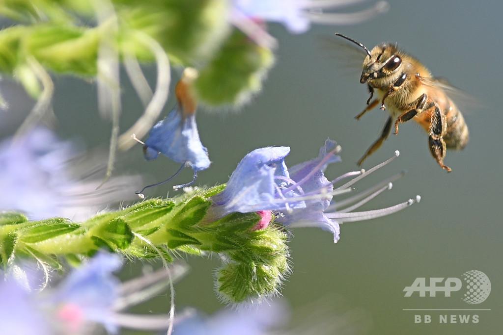 携帯の電磁放射線、昆虫激減の一因か 独研究
