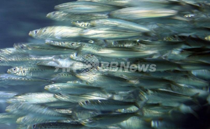 植物性プランクトンの減少で海の食物連鎖が崩壊する恐れ、研究成果