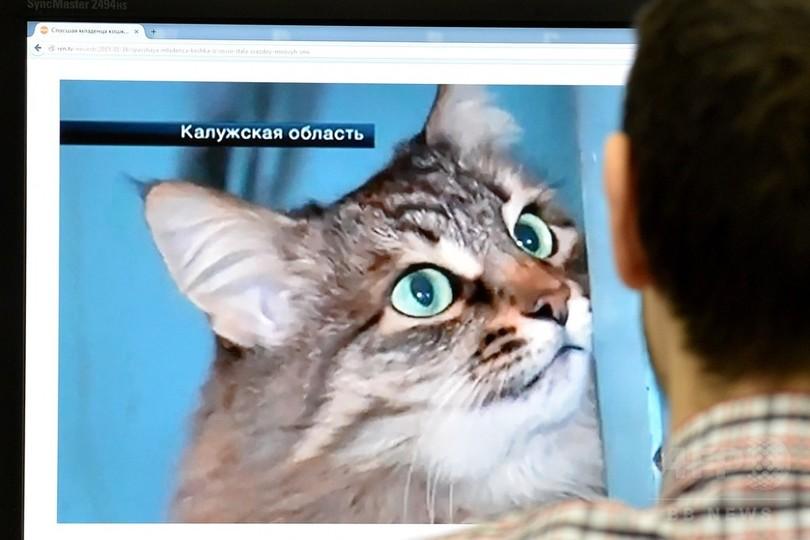 氷点下、野良猫が赤ん坊を温めて救う ロシア