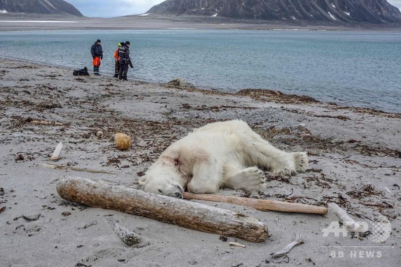 北極海の島でホッキョクグマがクルーズ船員襲う、その場で射殺