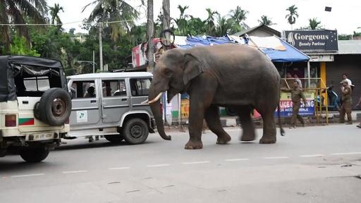 動画:街中に野生のゾウ出現、市民ら騒然 インド