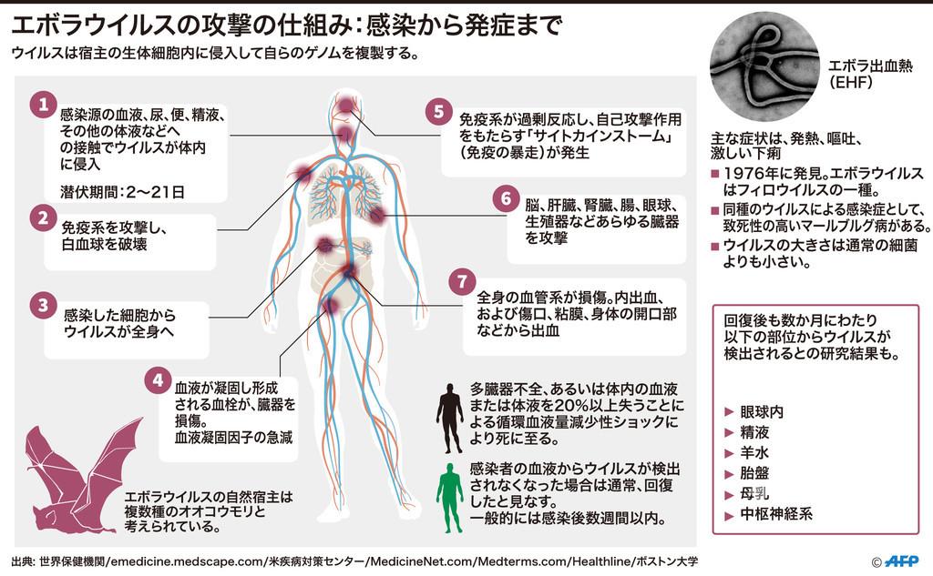 【図解】エボラウイルスの攻撃の仕組み:感染から発症まで