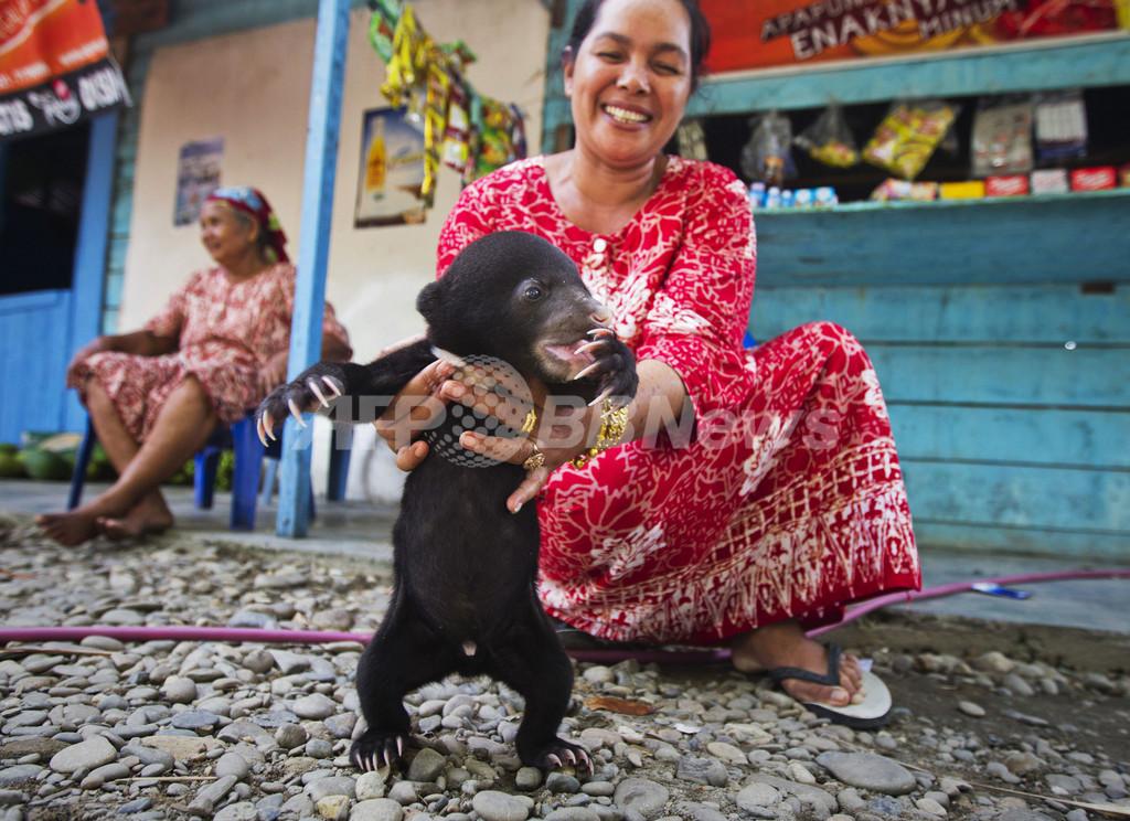 増加する野生動物の密売、インドネシア