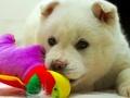 韓国の食用犬23匹、米国で新たな生活へ