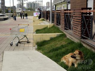W杯開催都市で野良犬を大量殺処分、人道的解決を要請 ロシア