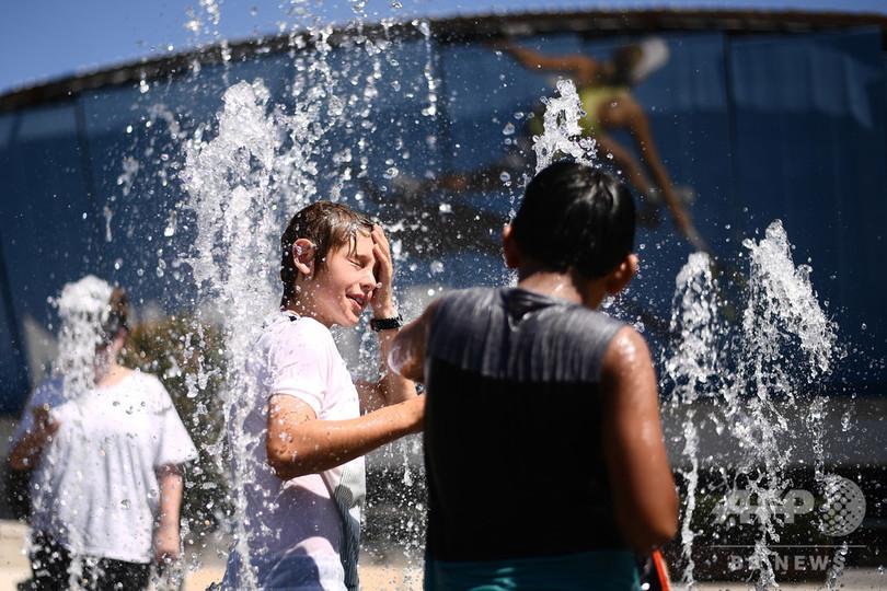 猛暑の豪南部、最高気温49.5度 コウモリも熱中症で落下