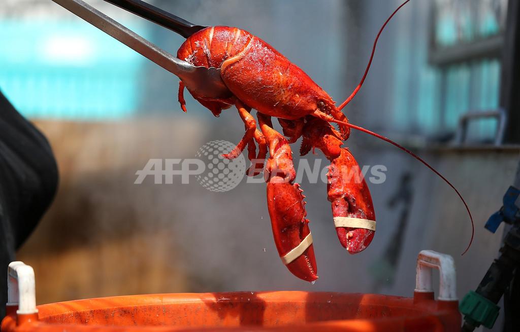 英研究者「シーフード優しく扱って」、甲殻類も痛み感じる可能性