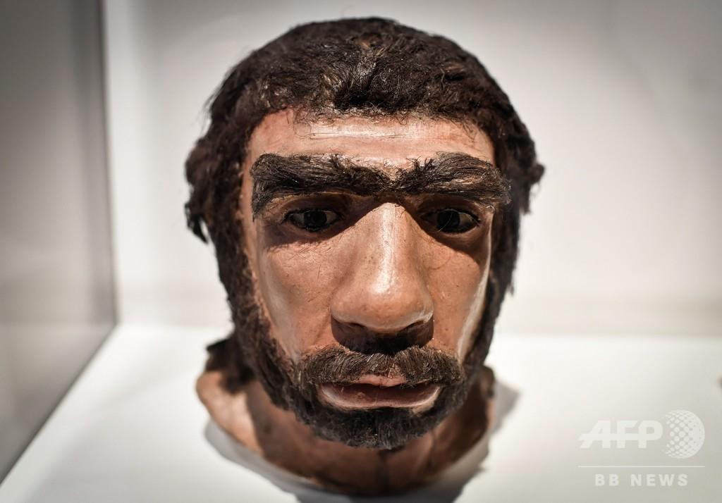ネアンデルタール人と現生人類の分岐、従来説より約30万年早い 英研究