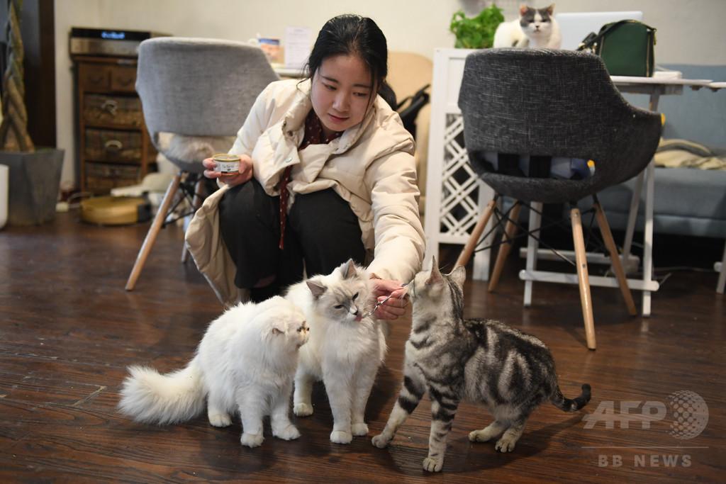 「空巣青年」に「雲養猫」 中国都市部の若者の暮らし