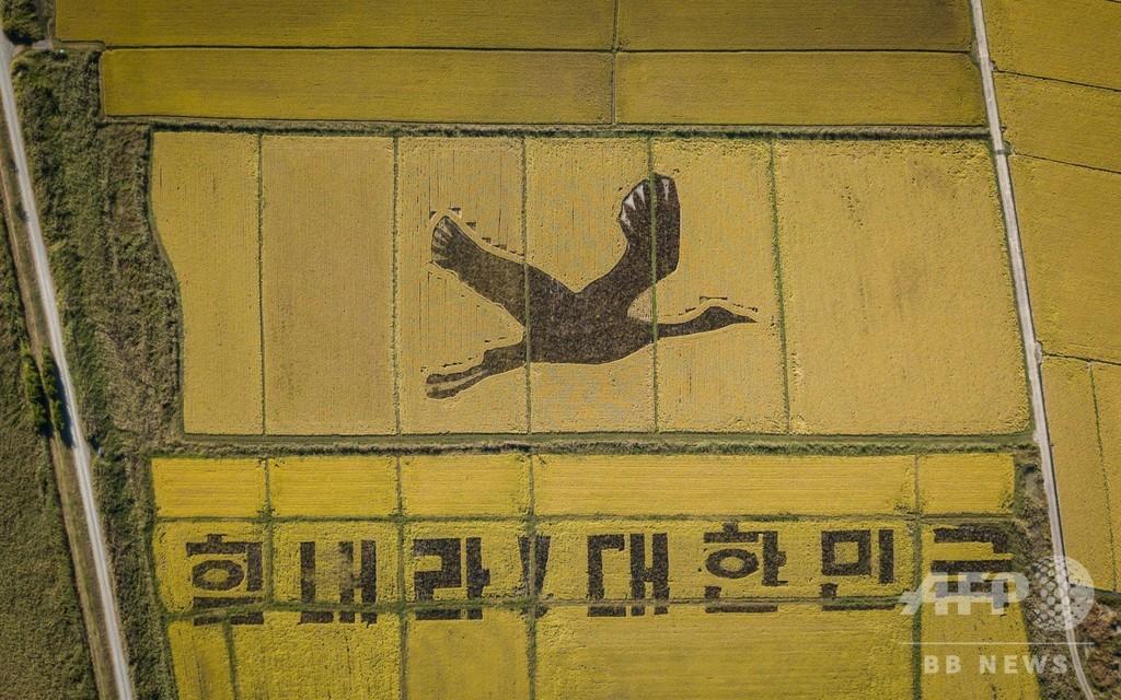 新型コロナに「負けるな!」 田んぼアートで励まし 韓国