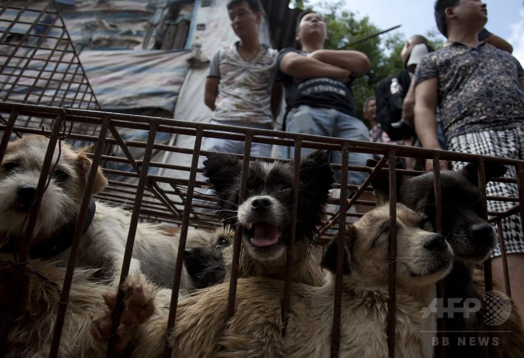 中国「犬肉祭」、中国人女性が犬100匹を買い取り救出