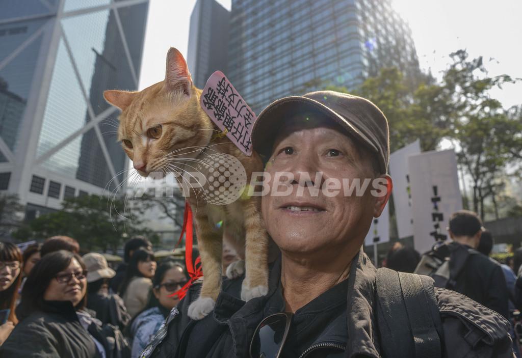 動物の権利求めるデモに1000人、香港