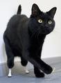 足失った黒猫にバイオニック義肢、英国