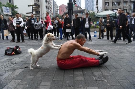 高齢男性と犬の路上パフォーマンス 重慶
