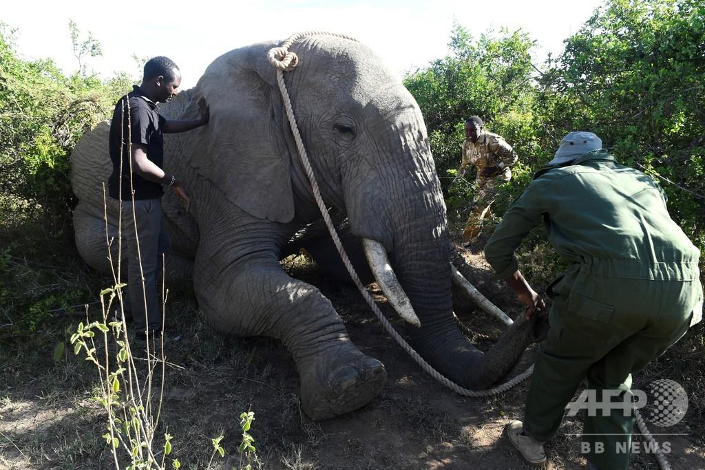 野生動物保護レンジャー、1年の殉職107人 訓練・装備など不足