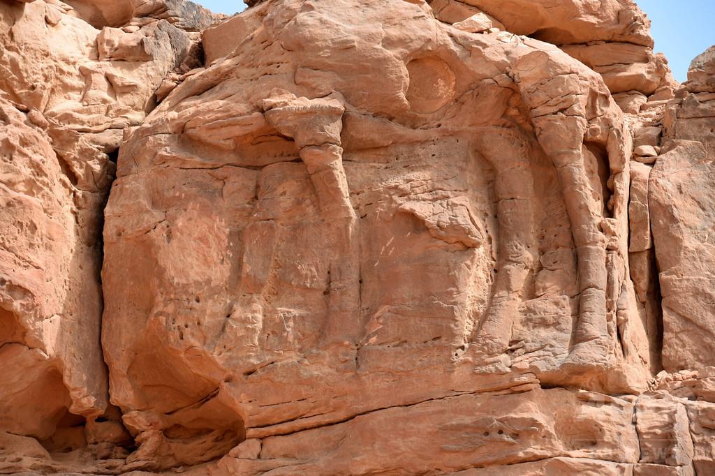 砂漠で発見された古代ラクダ彫刻、比類ない芸術性 サウジアラビア
