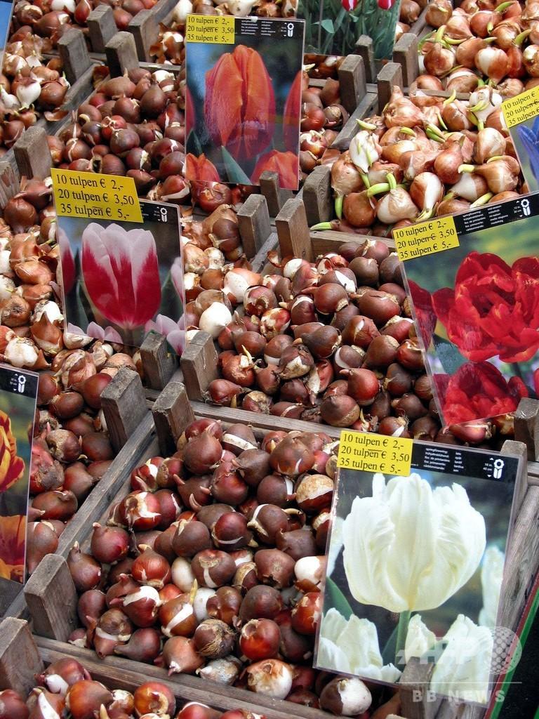 「チューリップ詐欺」横行、咲くのは1%…オランダ首都の水上花市場