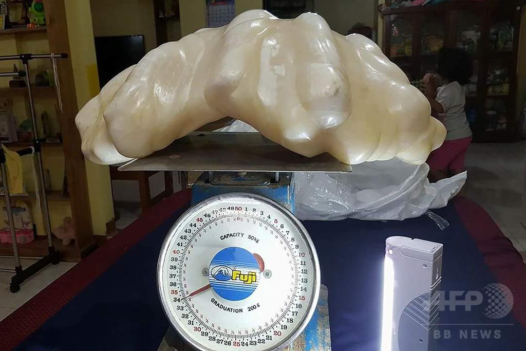 世界最大? 重さ34キロの巨大真珠見つかる フィリピン