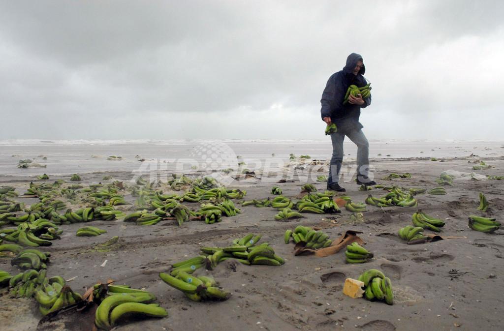 大量のバナナが海岸に打ち上げ、オランダ