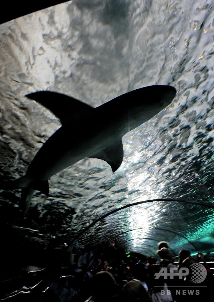 サメがまた観光客襲う、片足失った人も 豪グレートバリアリーフ