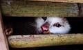 押収した猫数千匹を生