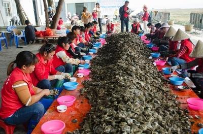 中国・北海に真珠採りのシーズン到来