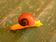 手付かずの自然に新種が1060種、ニューギニア島
