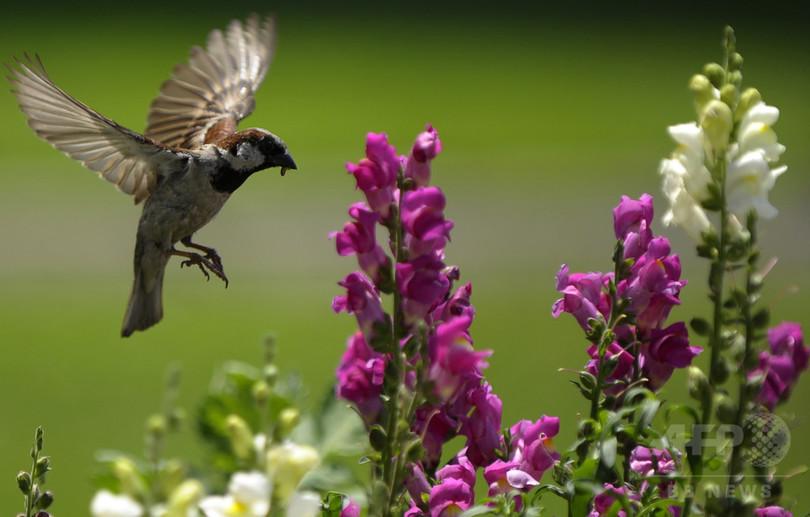 庭の野鳥給餌、恩恵受けるのは侵略的な外来種 NZ研究
