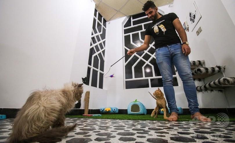 ぜいたくすぎ? イラク初の猫専用ホテルがオープン