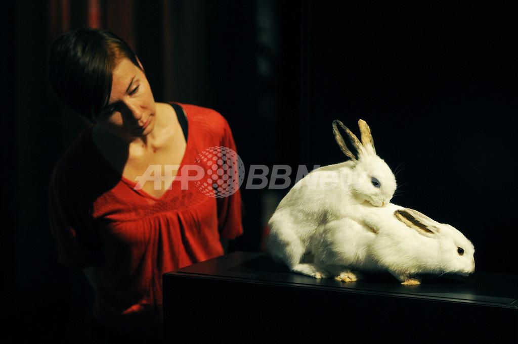 16歳以下はお断り、ロンドンで「動物のセックス」展