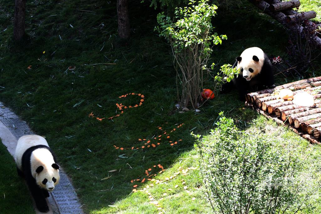 パンダ2頭が「引っ越し先」で最初の誕生日、みんなでお祝い