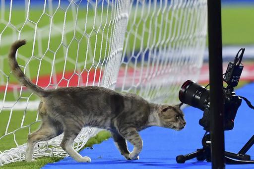 【今日の1枚】怪しいカメラ発見? 猫警備員がチェック