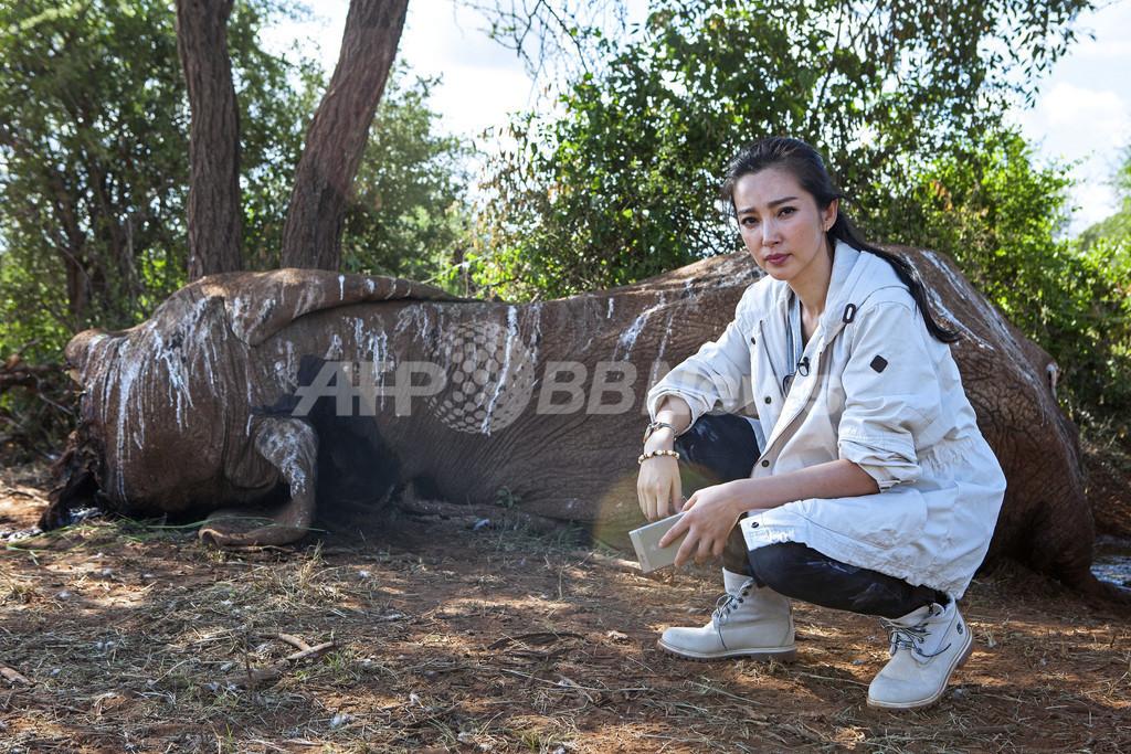ゾウの虐殺に終止符を、中国映画スターがアジアに呼び掛け