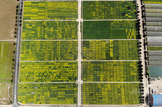 農業大開発の新種トウモロコシ、地元農民に盗まれる 湖南