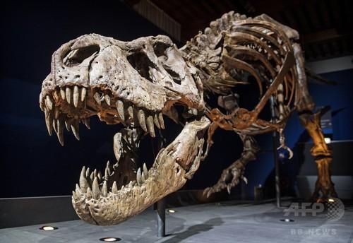 歯のかみ合わせ悪いT・レックス、なぜ骨を粉々にできた? 研究