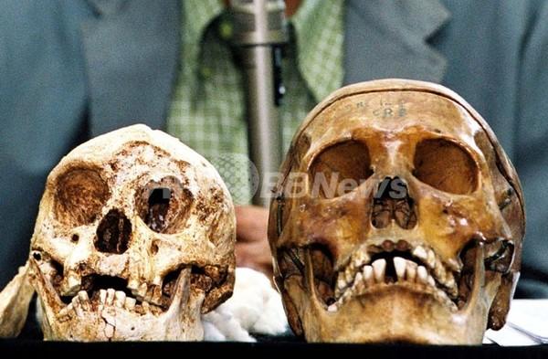 インドネシアのフローレス原人、進化の過程で小型化か