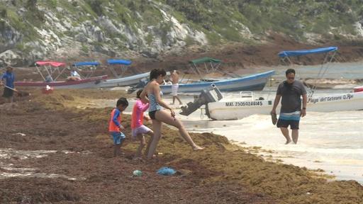 動画:メキシコ沿岸部に海藻が大量漂着、地元住民が不休で除去