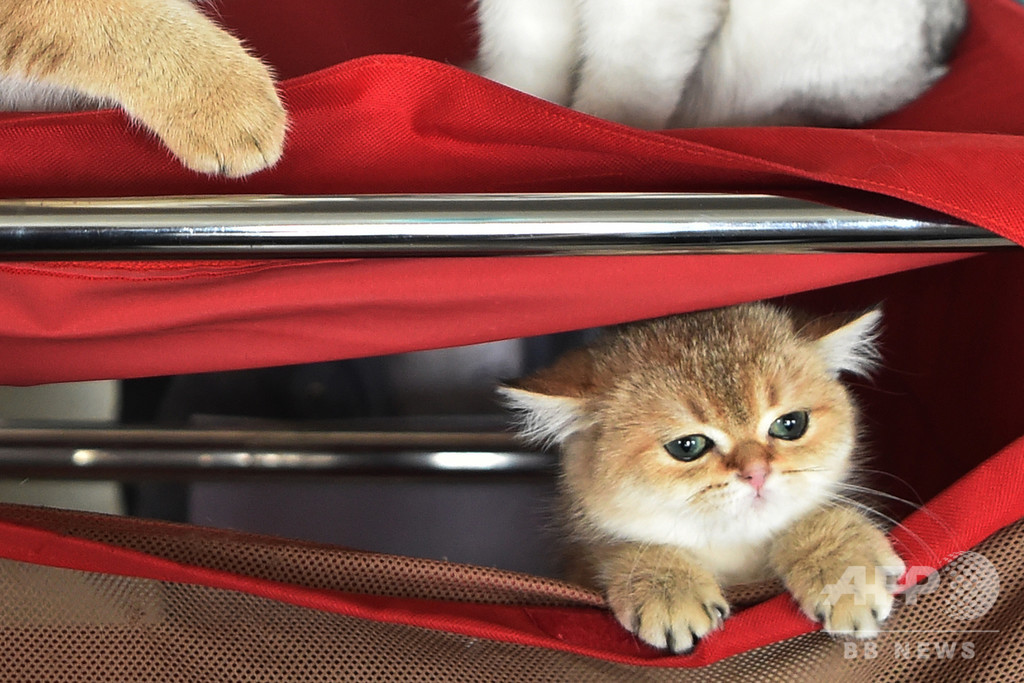 愛猫のためにも、あなたのためにも...屋内飼育を推奨 研究報告