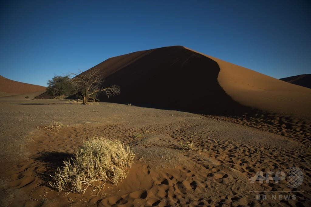枯れ木が織りなす砂漠の美、ナミビアの国立公園