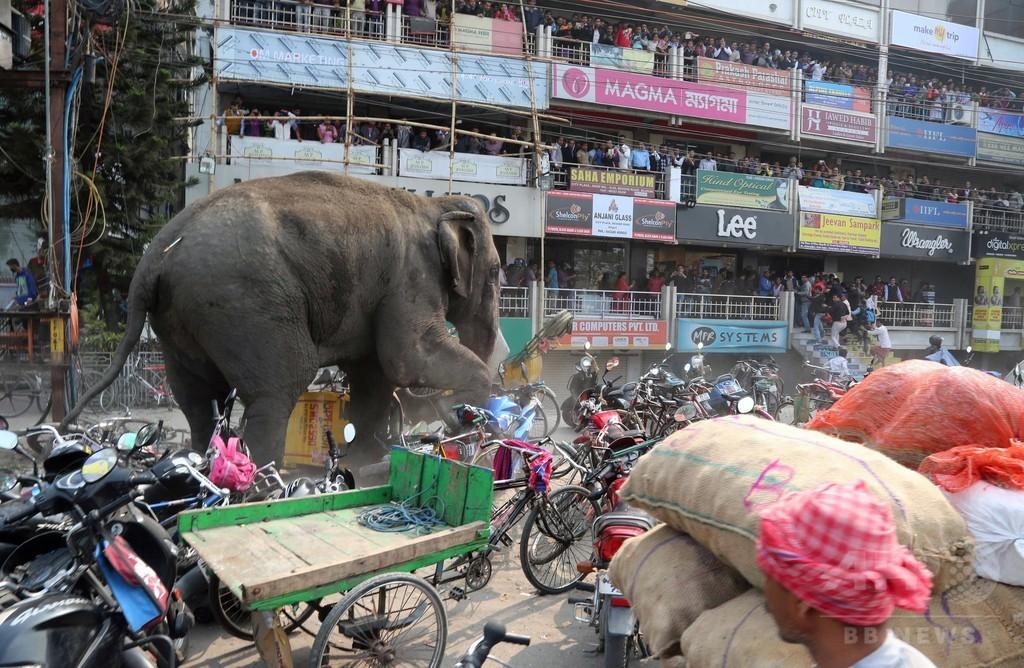 野生のゾウ大暴れ、建物100棟損壊 インド東部の町 写真17枚 国際