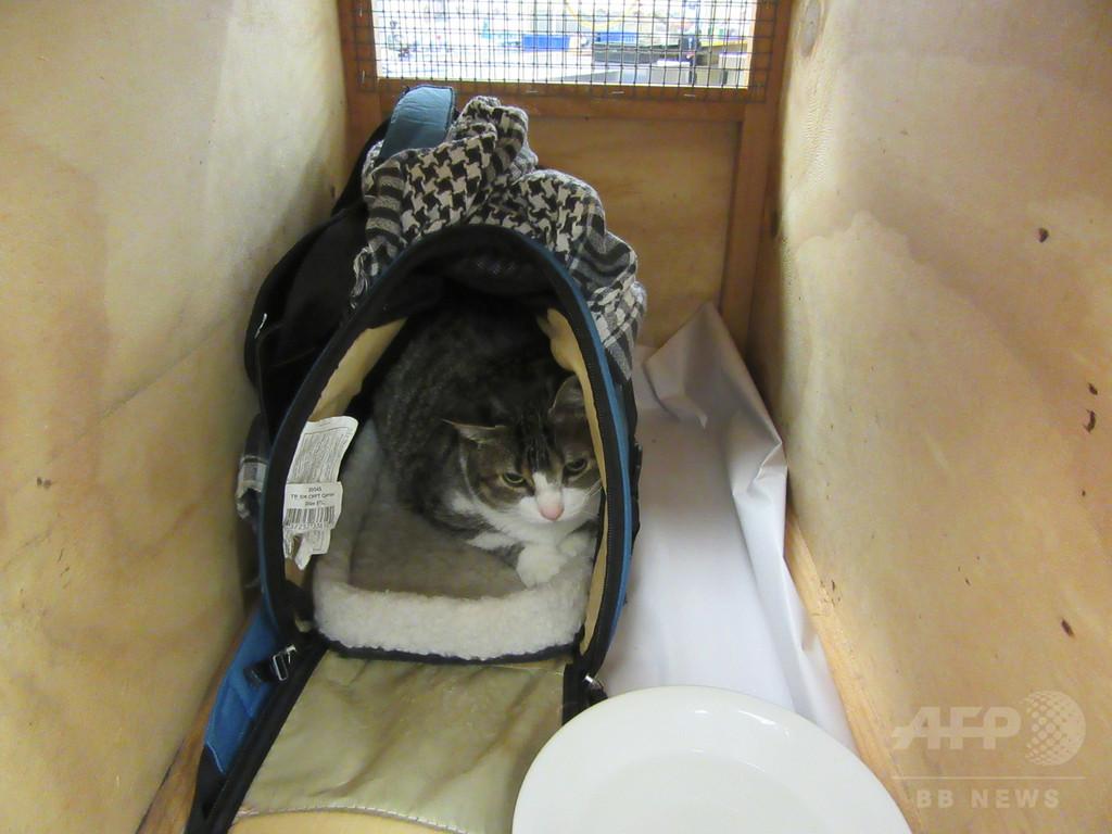 愛猫をハンドバッグに隠して入国試みる、NZ空港で女を拘束