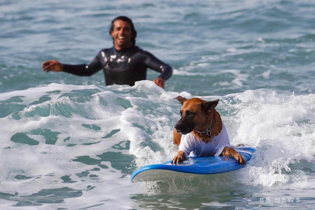 犬だって参加したい? サーフィン大会会場でワンちゃんも練習 イスラエル