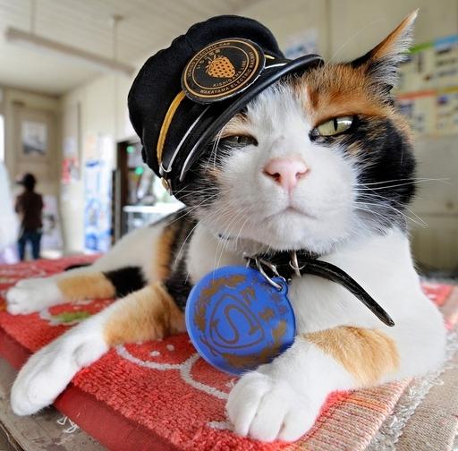 和歌山電鉄の名物ネコ駅長「たま」、フランス映画に出演