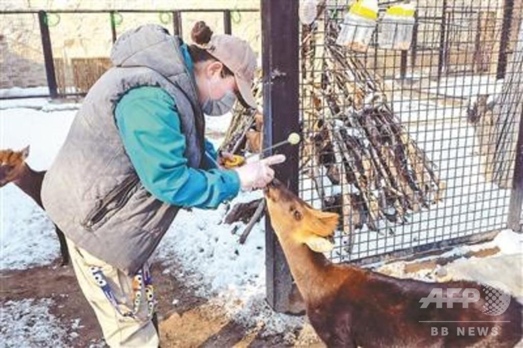 自宅にいながら動物を観察、北京動物園が「ネット動物園」開設