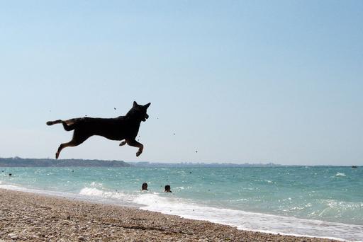 海だ!波打ちぎわでジャンプ、ウクライナ