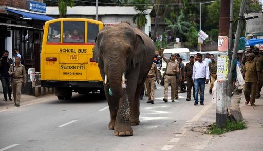街中に野生のゾウ出現、市民ら騒然 インド